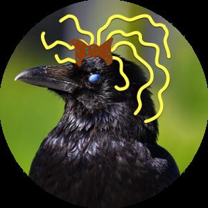 Wrona Lylax