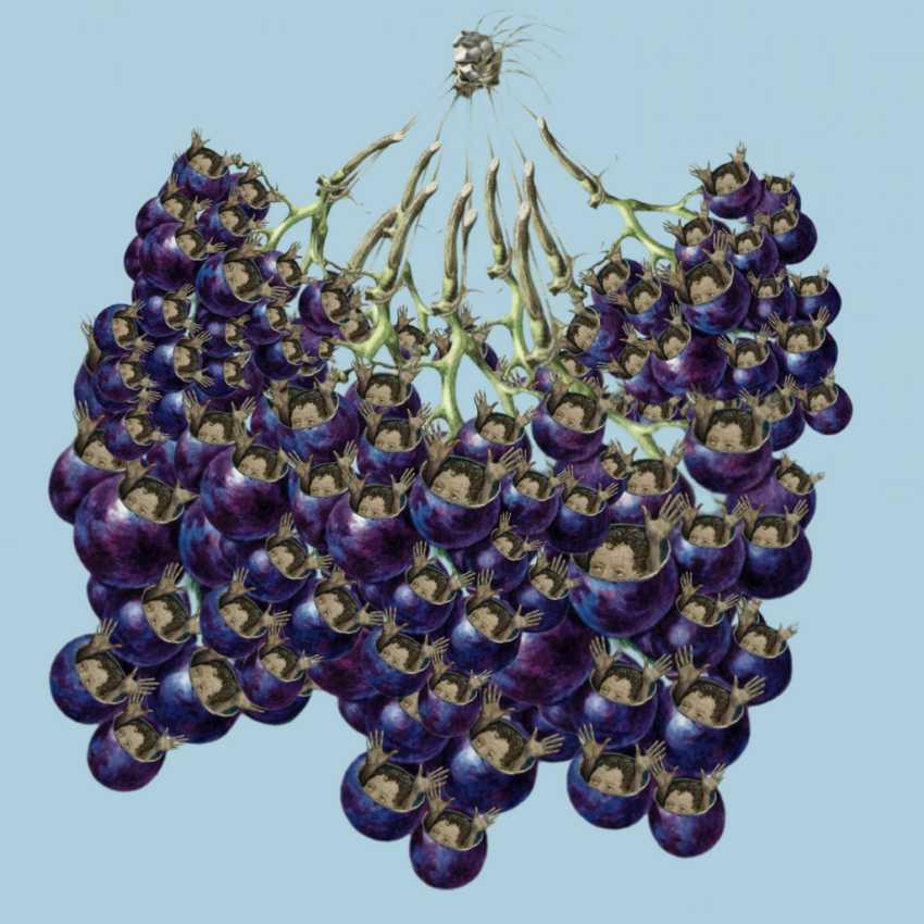 winogronkagotowe
