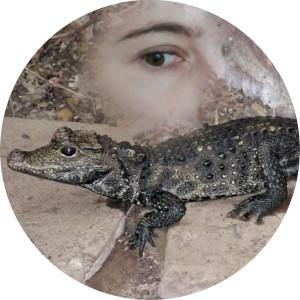 krokodyl mireczek